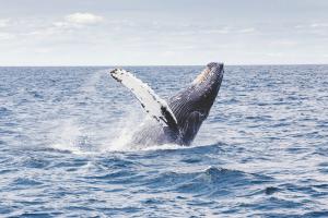 Fischfang, Hoffnung für das arktische Meer