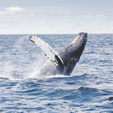 Hoffnung für das arktische Meer
